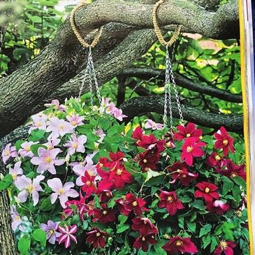 Anemone, cestas colgantes, revista The Garden RHS