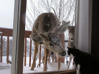 venado viendo al gato que esta dentro de la casa
