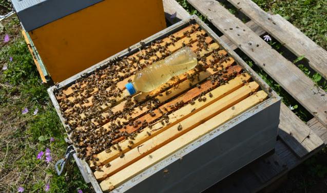Πως φτιάχνουμε πολλά μελίσσια που να βγάζουν πολύ μέλι