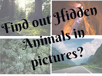 Hidden Animals Picture Puzzles