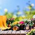 Tanaman Bunga Hias Yang Cocok Ditanam Di Halaman Rumah Kamu
