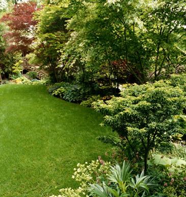 Plantas para rincones h medos y oscuros for Jardines con arboles frutales