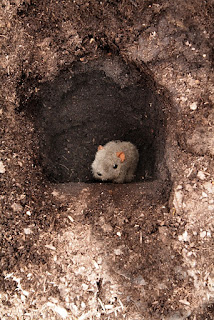 Shane in a Hole