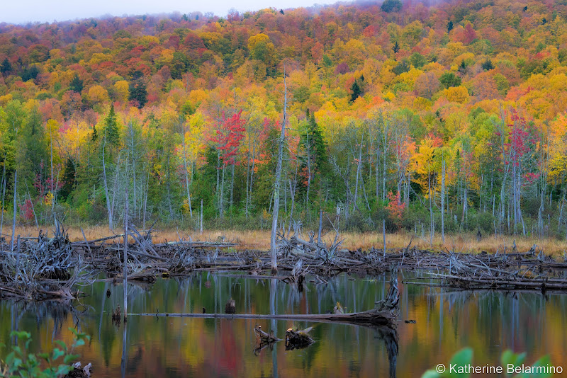 Moosehead Lake Fall Foliage Things to Do in Moosehead Lake Maine