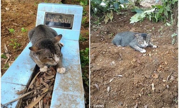 Menyedihkan, Sudah Setahun Lamanya Kucing Ini Masih Menjaga Makam Tuannya