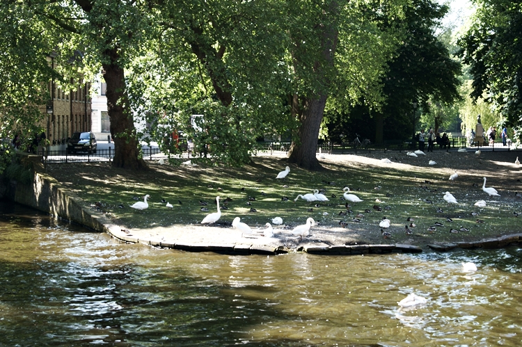 Blog & Fotografie by it's me! - Schwände auf einer Wiese am Ufer in Brügge, Belgien