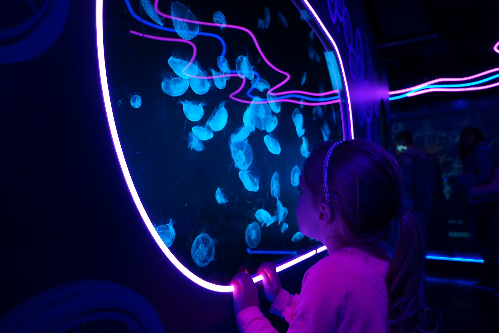 girl watching jellyfish