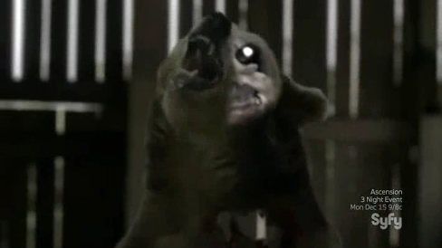 L'occhio dell'orso Zombie