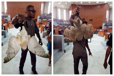 See The Strange Bird Found At Akwa Ibom State House Of Assembly.