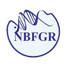 NBFGR Recruitment 2020 Young Professional-II – 11 Posts www.nbfgr.res.in Last Date 13-07-2020