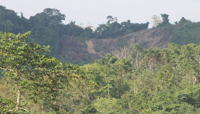 FKL: Terjadi Peningkatan Kasus Perambahan dan Ilegal Logging dalam KEL