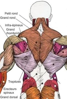 Top Exercises For a Complete Back Workout