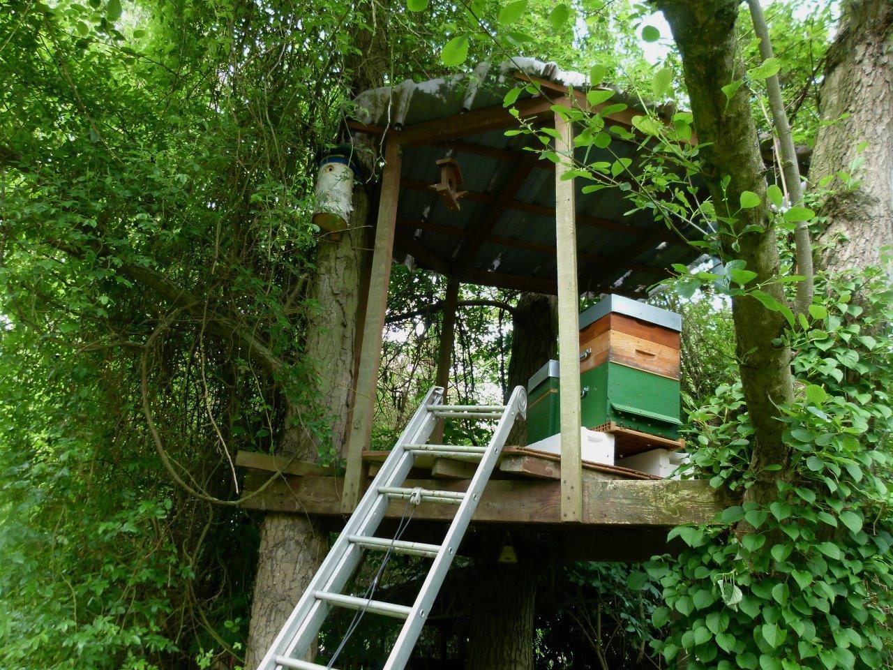 Le blog de parcs et jardins de l 39 oise visite pjo du for Le jardin de catherine com