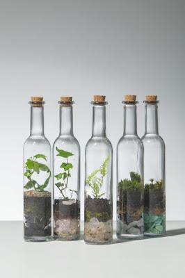 Terarium Botol