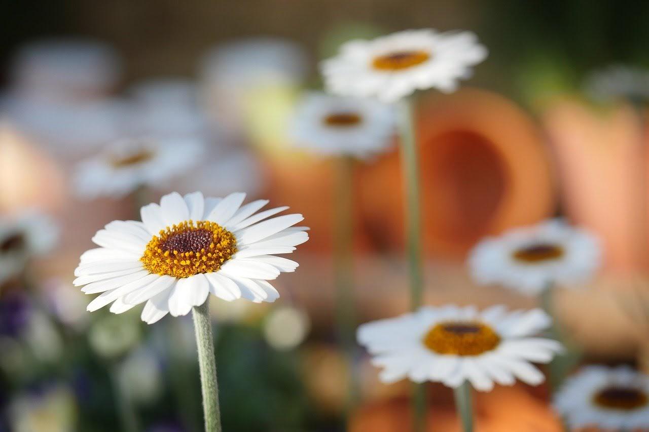 صورة الازهار البيضاء الجميلة - اجمل واحلى صور الطبيعة الجميلة والخلابة في العالم