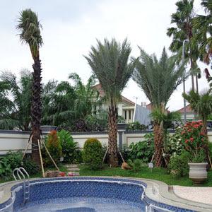 Taman Tropis | www.tukangtamanbanjarmasin.com