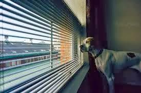 cães em apartamento