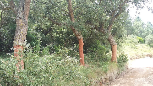 cork trees, photos, wordless wednesday