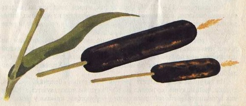 Мастерим поделки из природных материалов http://parafraz.space/, http://deti.parafraz.space/, http://eda.parafraz.space/,декор осенний, праздник урожая, осень, для дома, для интерьера, украшение дома, осеннее настроение, для осени, праздники осени, поделки осенние, мастерим поделки, своими руками, поделки из природных материалов, из природных материалов, из шишек, из дерева, из овощей, из семян, из ракушек, мастерим с детьми, для детского сада, для школы, поделки из природного материала своими руками для школьников, из цветов, из камней, из растений, из листьев, Мастерим поделки из природных материалов, Мастерим поделки из природных материалов http://prazdnichnymir.ru/ что можно сделать из природных материалов, поделки своими руками из подручных средств в домашних условиях, поделки для сада своими руками из природных материалов, оригинальные поделки своими руками из неожиданных материалов, поделки из природного материала для детского сада, поделки для сада своими руками из подручных материалов, поделки из природного материала, поделки из шишек, поделки из ракушек, поделки из дерева, поделки из сухих растений, поделки для школы, поделки для детского сада, что можно сделать из сухих растений, что можно сделать из ракушек, что можно сделать из растений, прикольные поделки, идеи поделок из природных материалов,http://handmade.parafraz.space/, http://prazdnichnymir.ru/, http://psy.parafraz.space/
