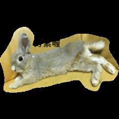 rabbit peanut