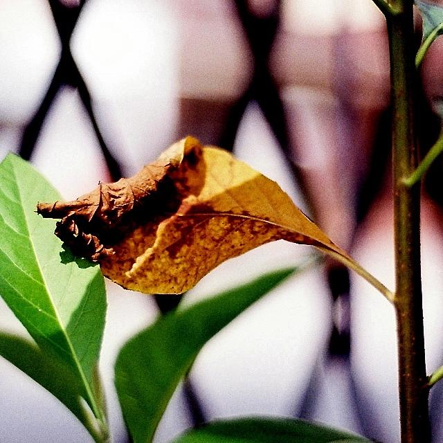 #AnalogDiary A Garden Ensemble, AF Nikkor 50mm F1.8 D 03