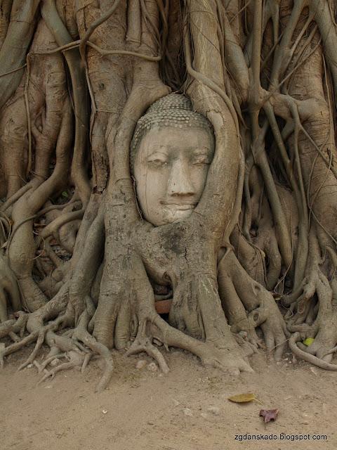 Ayutthaya - Wat Mahathat - Głowa Buddy
