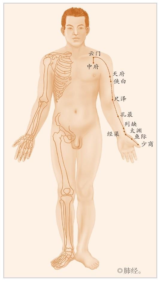 肺經:人體最容易受傷的經(人體內的宰相)
