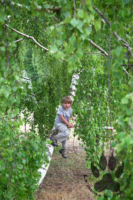 Suede-Scanie-Falsterbo-petit-loup-arbre