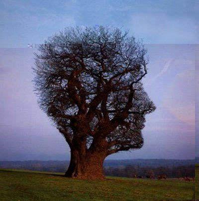 Gambar Pohon Aneh