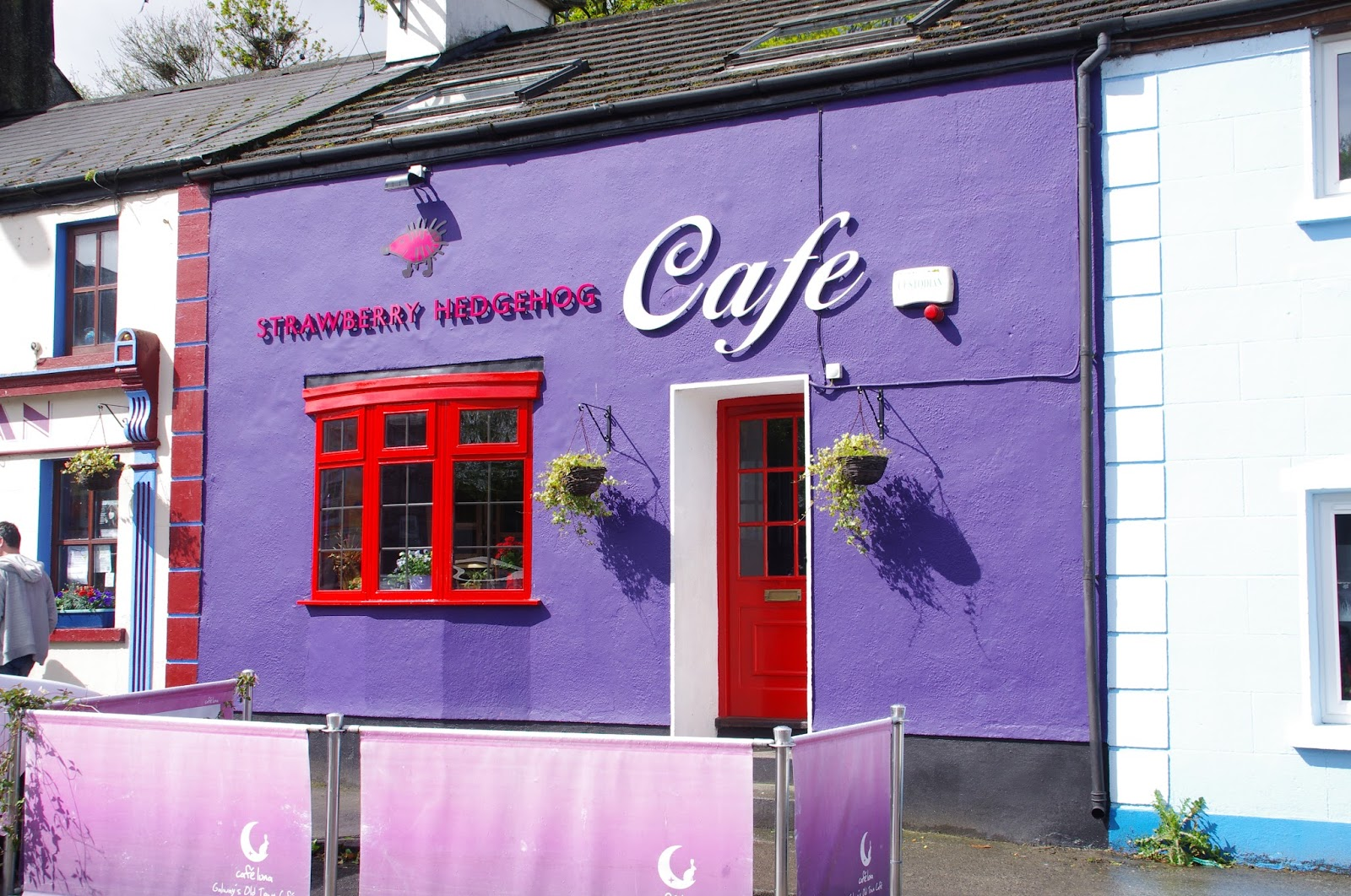 Purple cafe in Kinvarra Ireland
