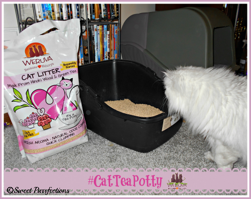 Truffle checking out the appealing smell of the WeRuVa cat litter.