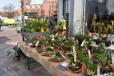 Frühlingsblumen zum Verkauf