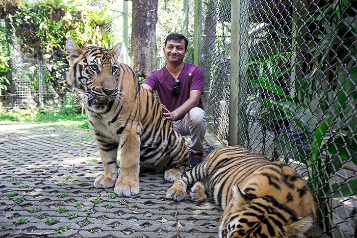Tiger Kingdom, Phuket, Thailand
