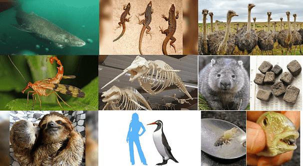 Hayvanlar Alemi Hakkında Az Bilinen 10 İlginç Bilgi