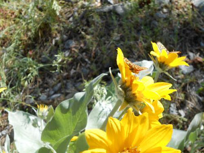 spiritual radiance, spiritual teacher, genoa nevada, yellow flowers, nature