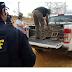 Operação conjunta apreende 87 animais silvestres em Cícero Dantas-BA