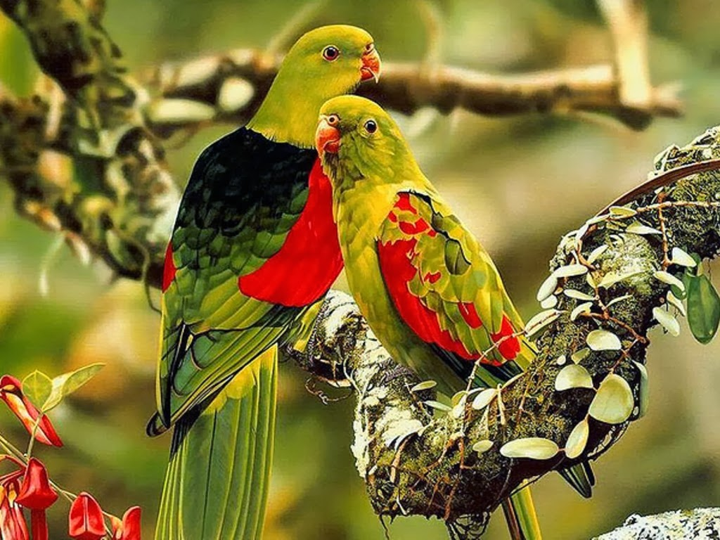 All new wallpaper beautiful birds wallpapers hd - Hd pics of nature with birds ...