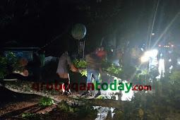 Pohon Tumbang, Lalulintas di Jalan Kuwu-Sulursari Sempat Macet
