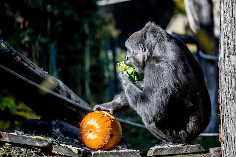 Halloween-programok pénteken a Fővárosi Állatkertben