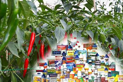 Beberapa Jenis Pestisida Yang Biasa Digunakan Pada Tanaman Cabai