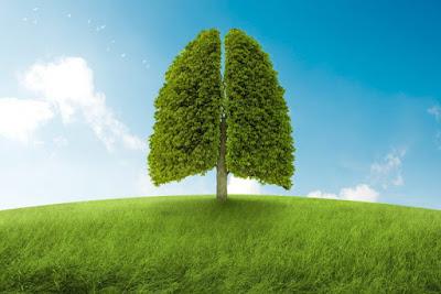 làm thế nào để lá phổi khỏe mạnh