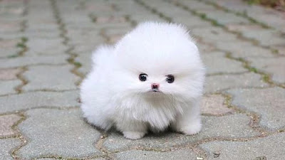 Cutest Dog Breed In The World