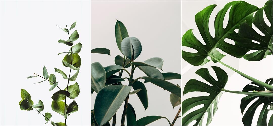 darmowe plakaty do druku z roślinami - monstera, eukaliptus