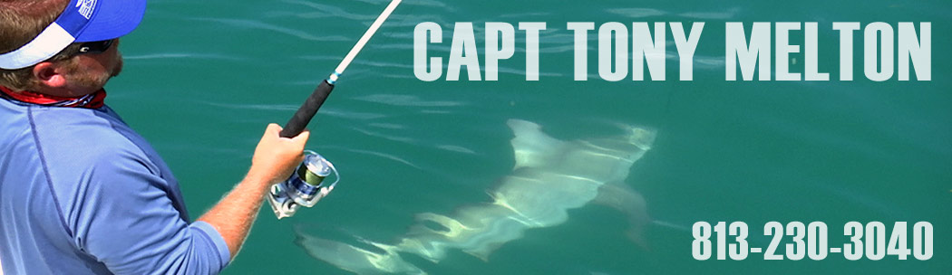 Captain Tony Melton Fishing Charters