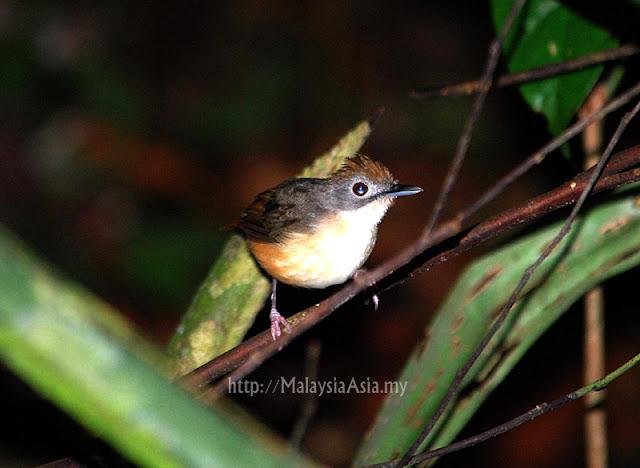 RDC Birding