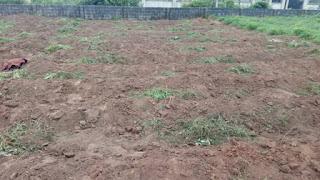 land preparation methods