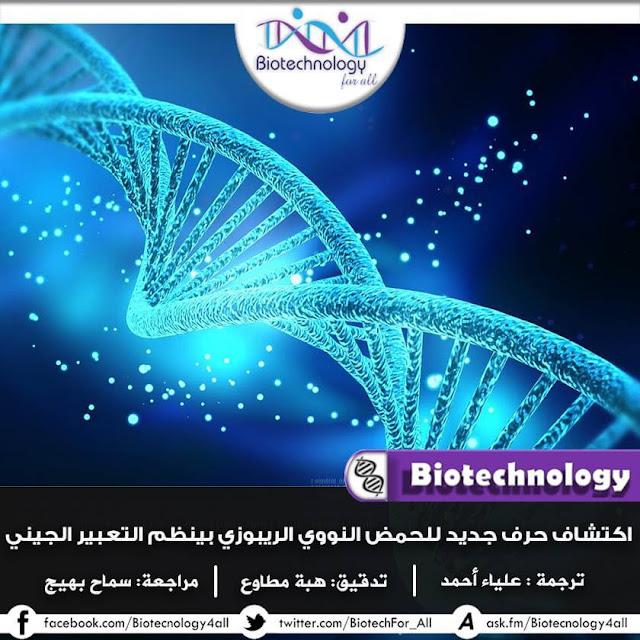 اكتشاف قاعدة جديدة في الحمض النووي الريبوزي تُنظيم التعبير الجيني