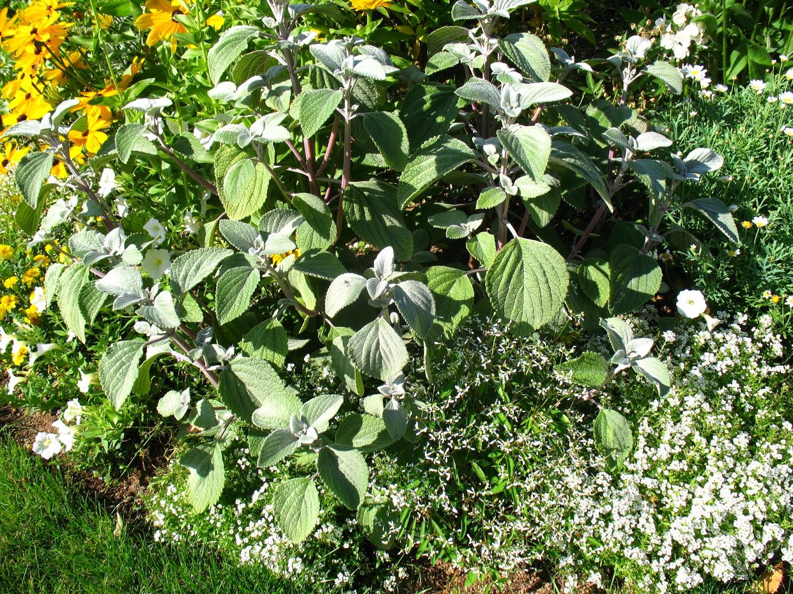 Roses du jardin ch neland concours maisons fleuries - Laisser libre cours a son imagination ...