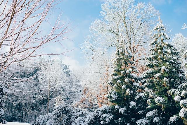 fotografía invierno arboles y nieve fin de año 2015
