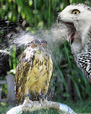 Lustige Tierbilder Picdump Eule auf Ast